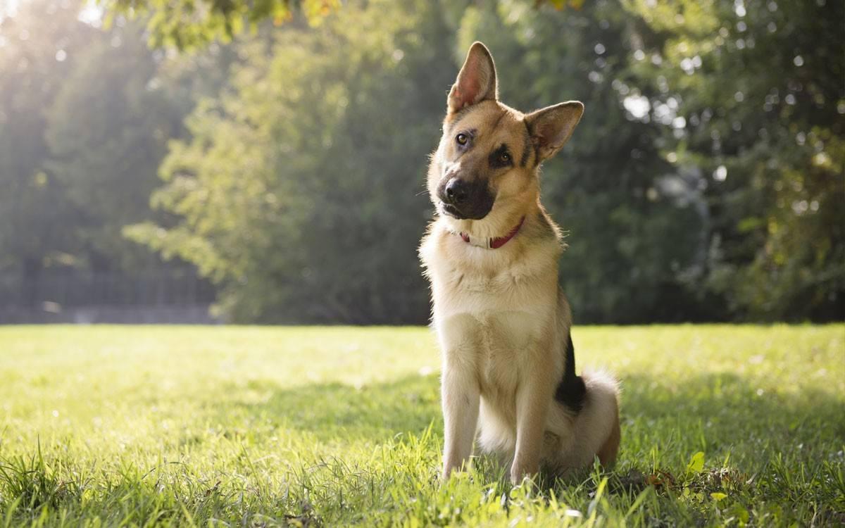 Английские клички для собак: как не сделать ошибку в выборе имени