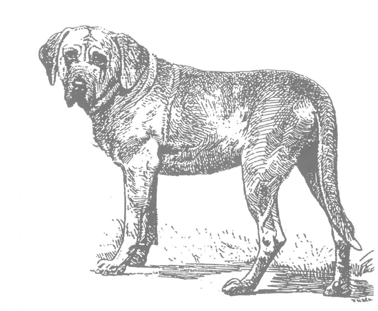 Декоративные собаки: список пород, их преимущества и недостатки