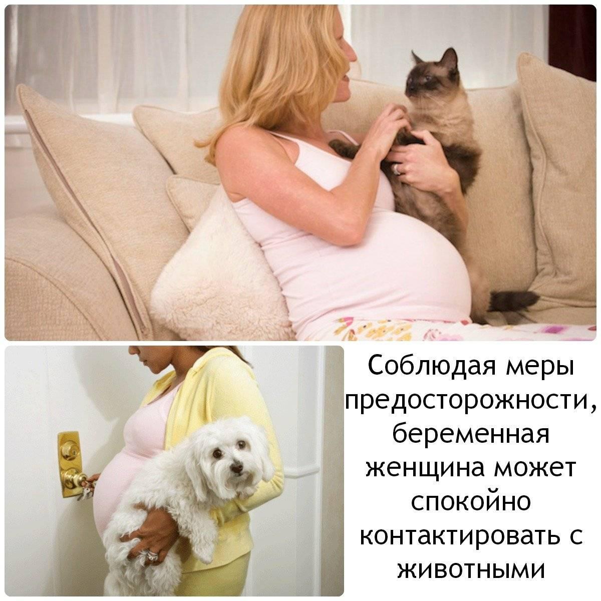 Почему беременным нельзя гладить кошек и какие угрозы существуют? почему беременным нельзя гладить кошек? беременным нельзя общаться с кошками