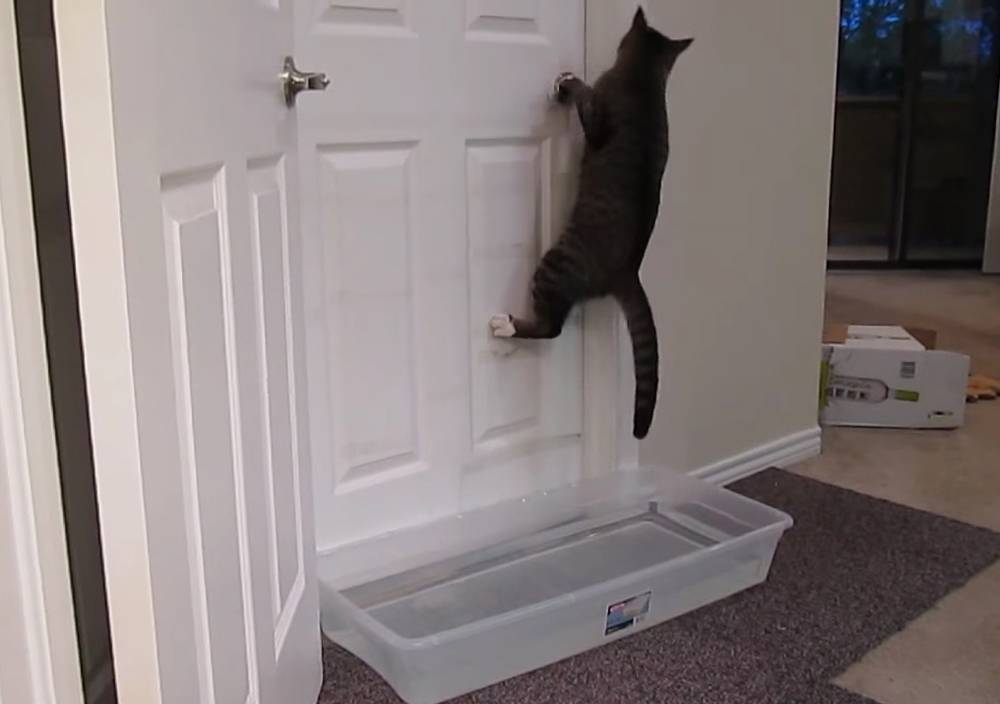 Почему кошка просит открыть дверь, но не заходит: объяснения и причины — 4 лапки