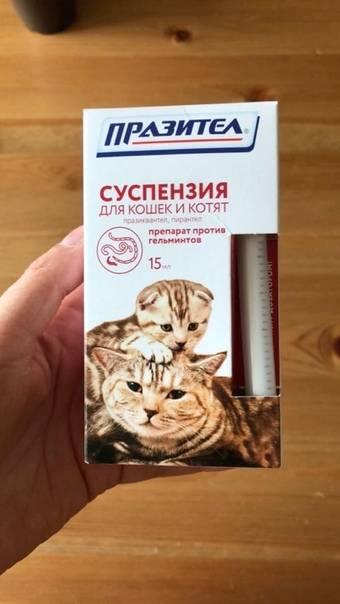 Как вывести глистов у котенка: лечение и профилактика