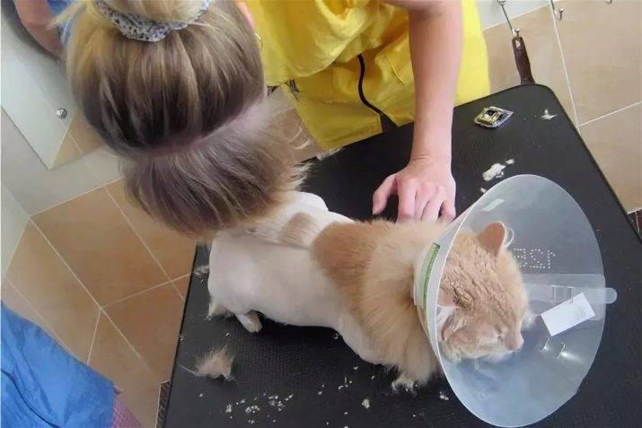 Как красиво подстричь кошку в домашних условиях?
