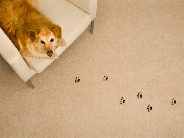 Особенности ремонта квартиры, в которой живут домашние животные