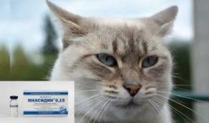 Сопли у котенка, кота и кошки: чем лечить