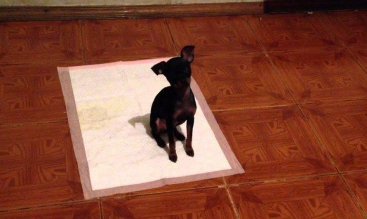 Как отучить собаку писать дома и приучить к улице