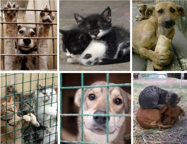Собаки и щенки в дар, породистые собаки бесплатно в добрые руки — собаки