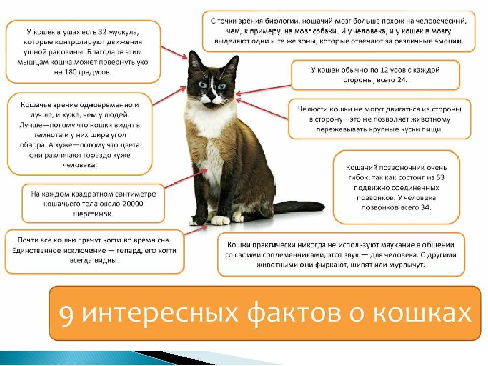 Почему «топчет» кот