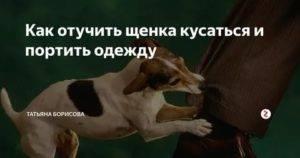 Как отучить кусаться щенка, взрослую собаку