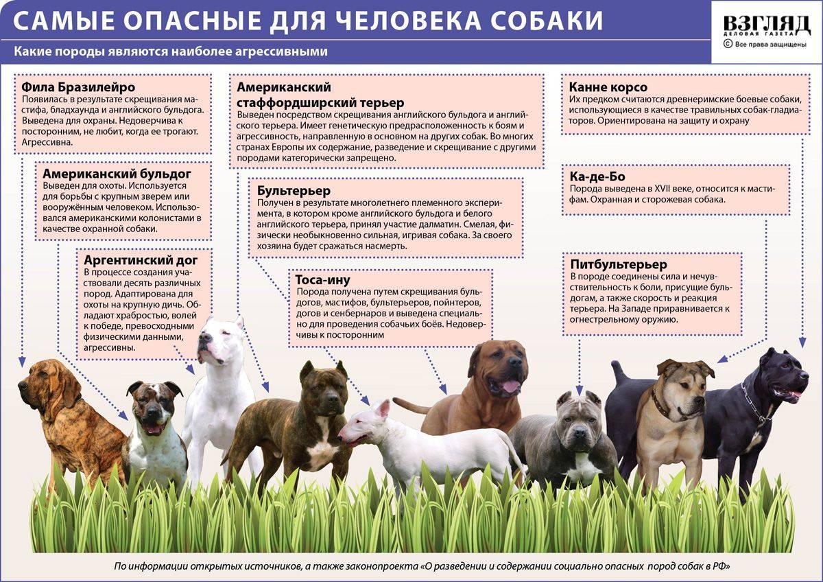 Русские породы собак — список с описанием