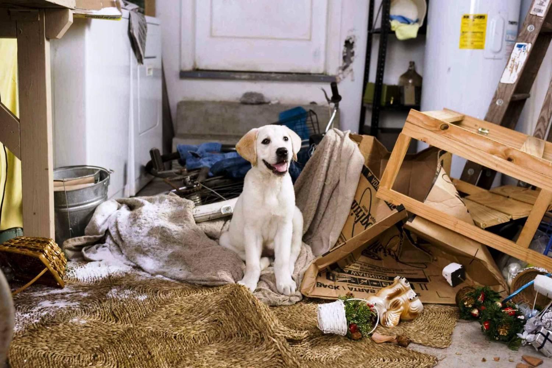 Как призвать к ответу нерадивого хозяина собаки?