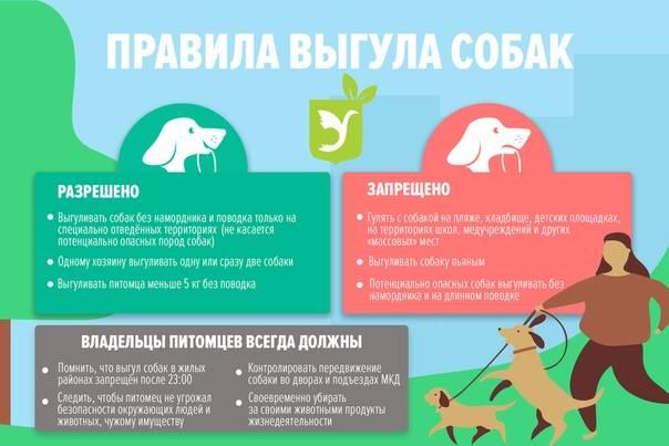 Закон о выгуле собак на 2019 год: запреты, штрафы, поправки