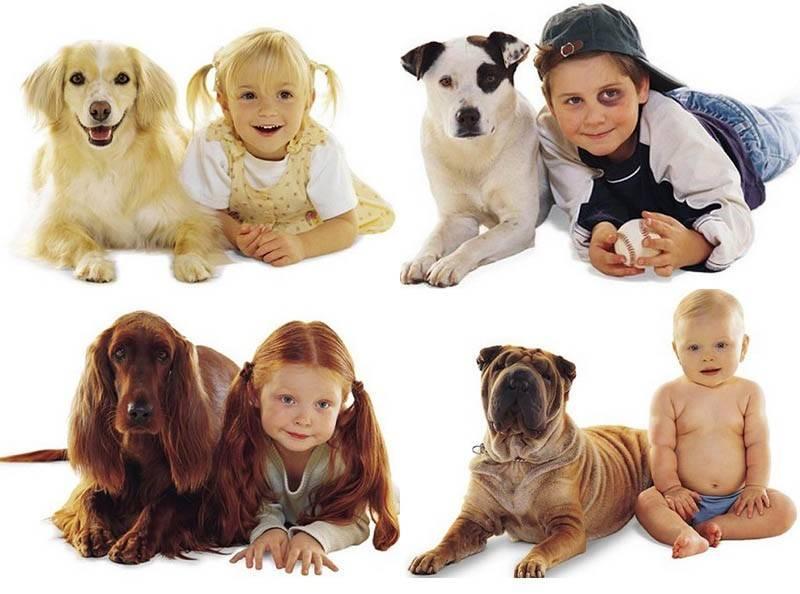 Какую и когда завести для ребёнка собаку. » сайт для детей и родителей