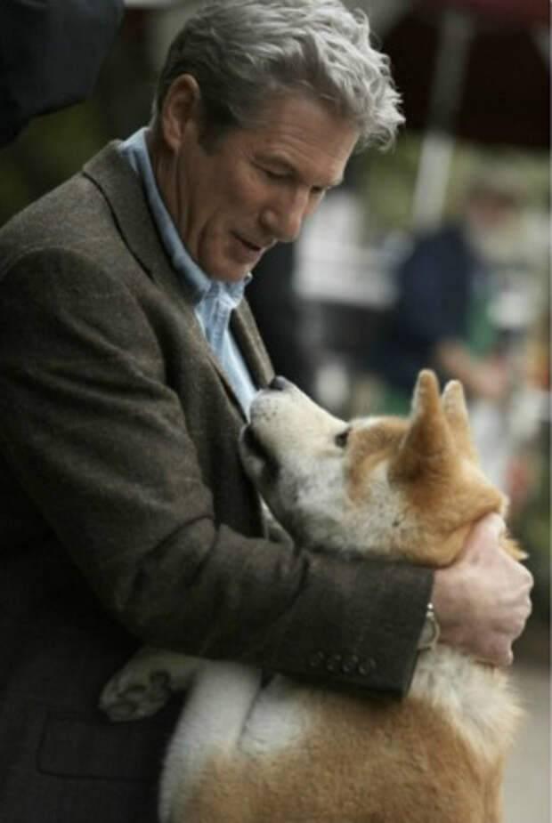 Порода собак хатико (55 фото): как называется пес из фильма, акита ину, сколько стоит самый верный друг, американский и японский щенок