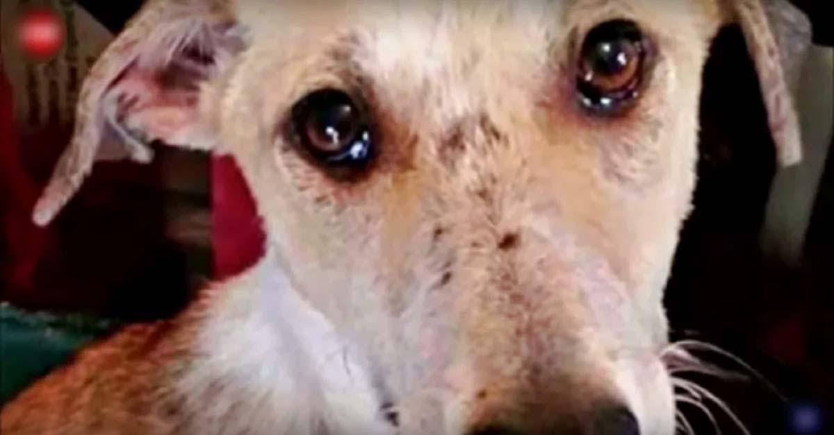 Почему моя собака плачет, когда я выхожу на улицу? — причины и лечение.