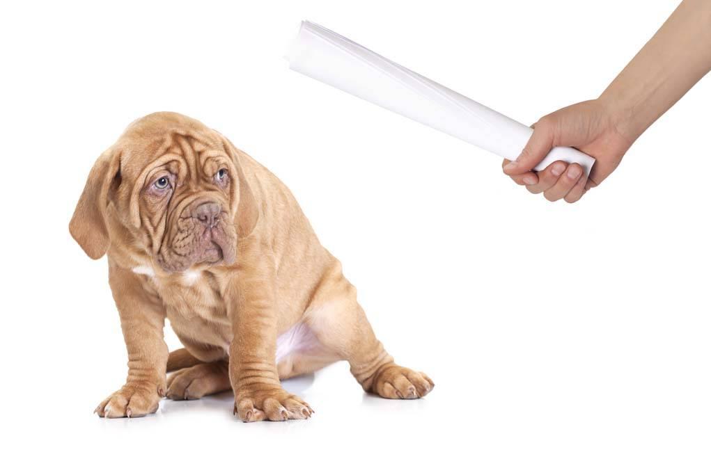 Как правильно наказывать собаку: рекомендации кинологов