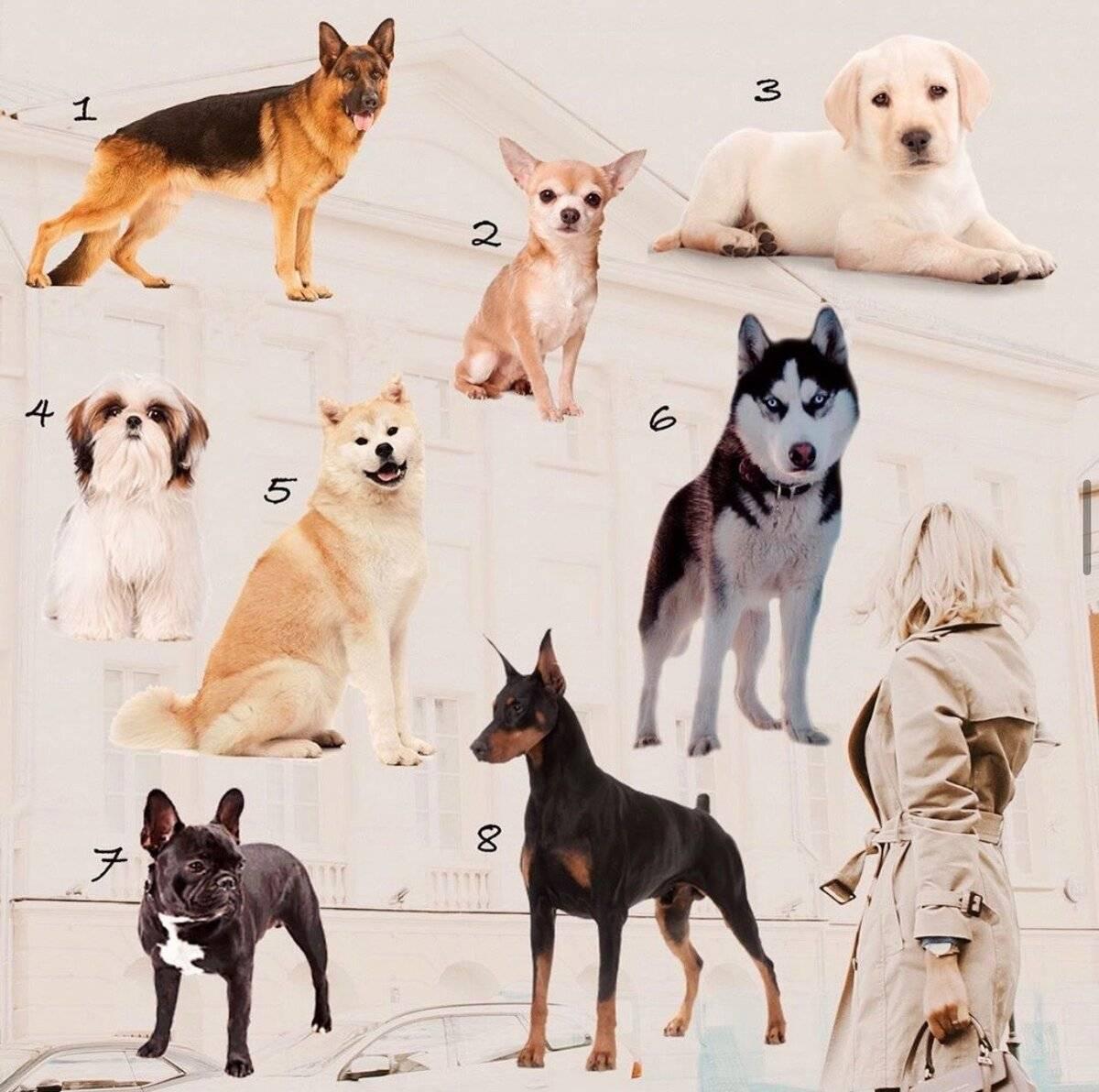 Подходящая порода собак по каждому знаку зодиака