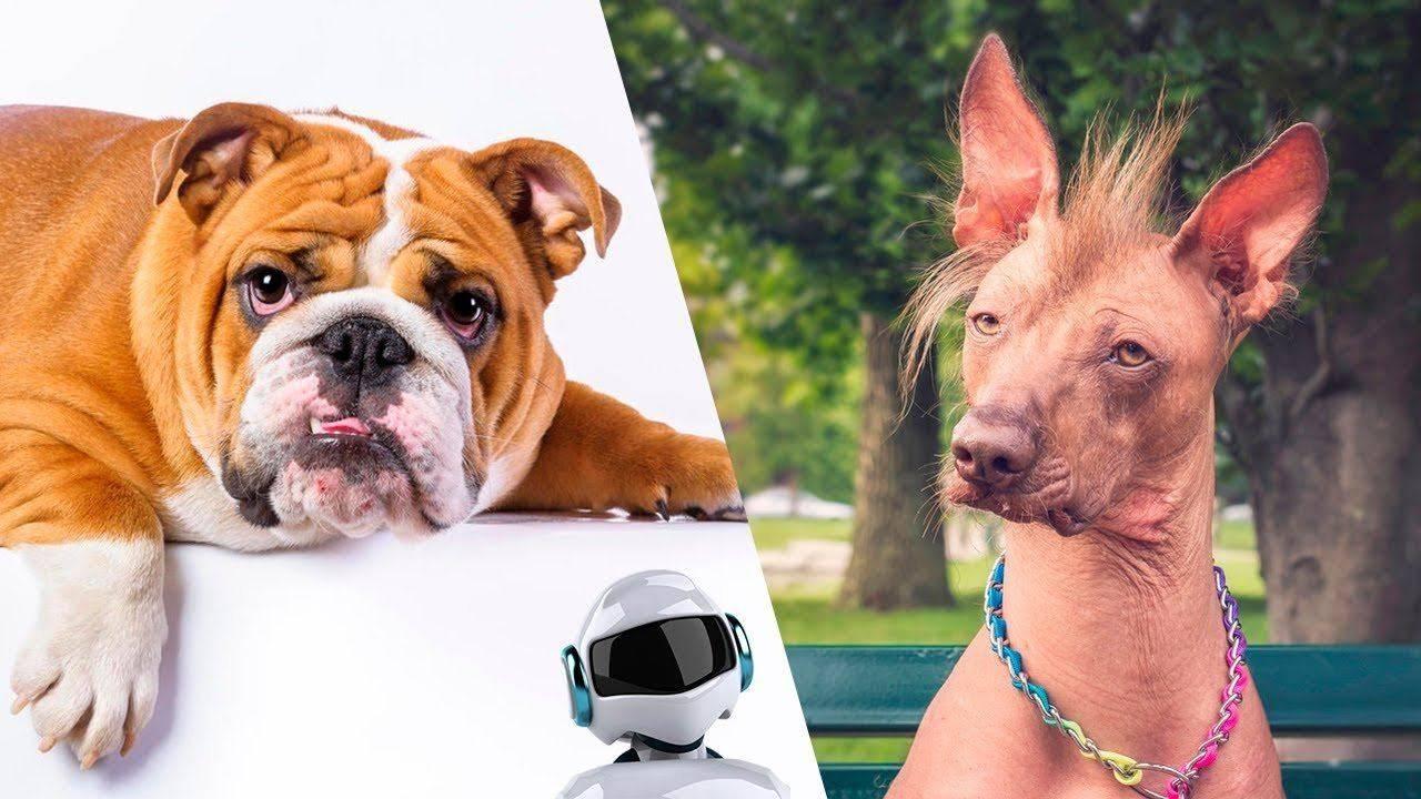 Популярные породы собак в россии и мире — фотографии, названия, описание