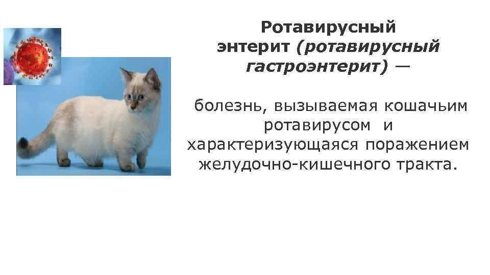 Коронавирусная инфекция кошек