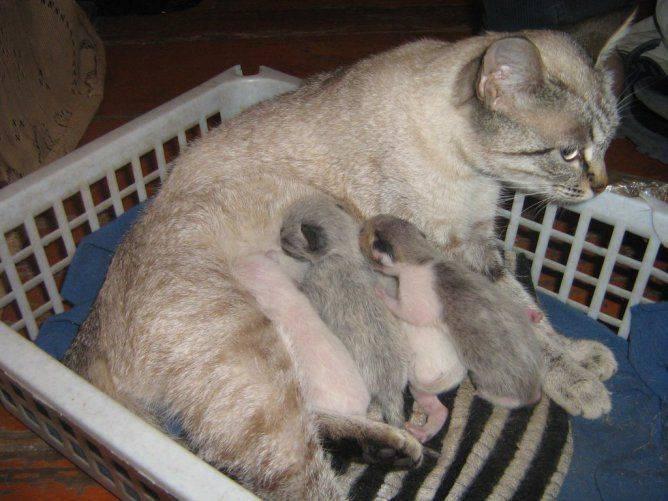 Чем кормить кошку после родов? - oozoo.ru