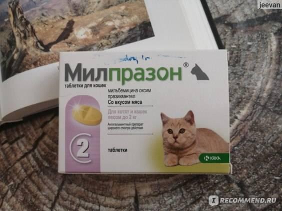 Милпразон для кошек — безопасность и здоровье в одном препарате