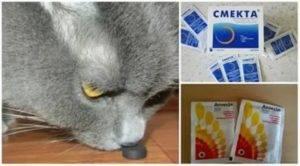 Что дать коту от поноса в домашних условиях: как остановить понос