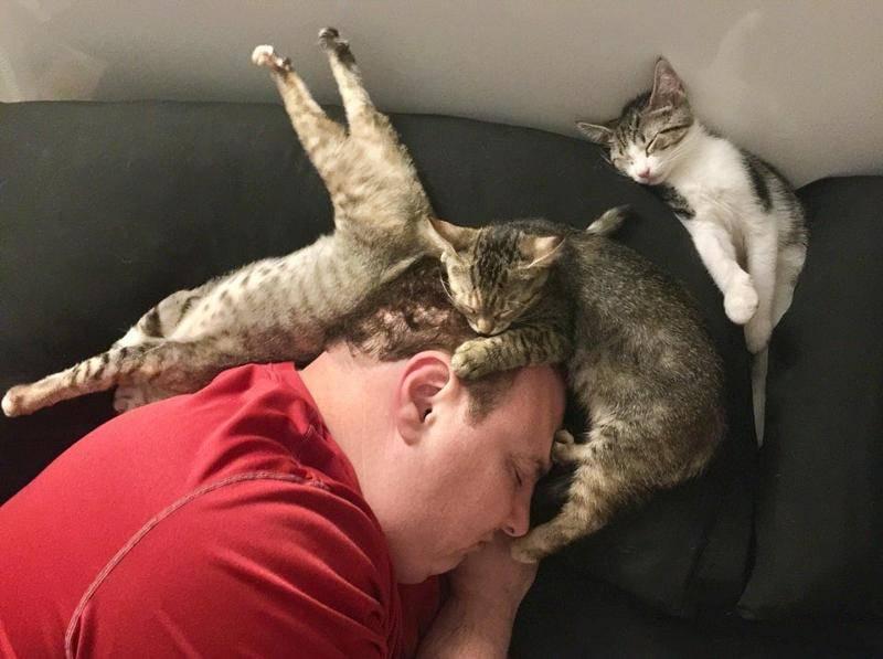 Почему кот лежит на спине: мнение ученых и бытовые наблюдения