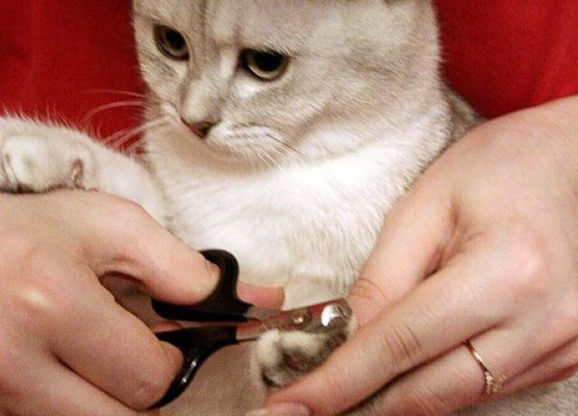 Как подстричь кошке когти в домашних условиях