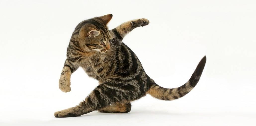 У кошки отнимаются задние лапы: насколько все серьезно?