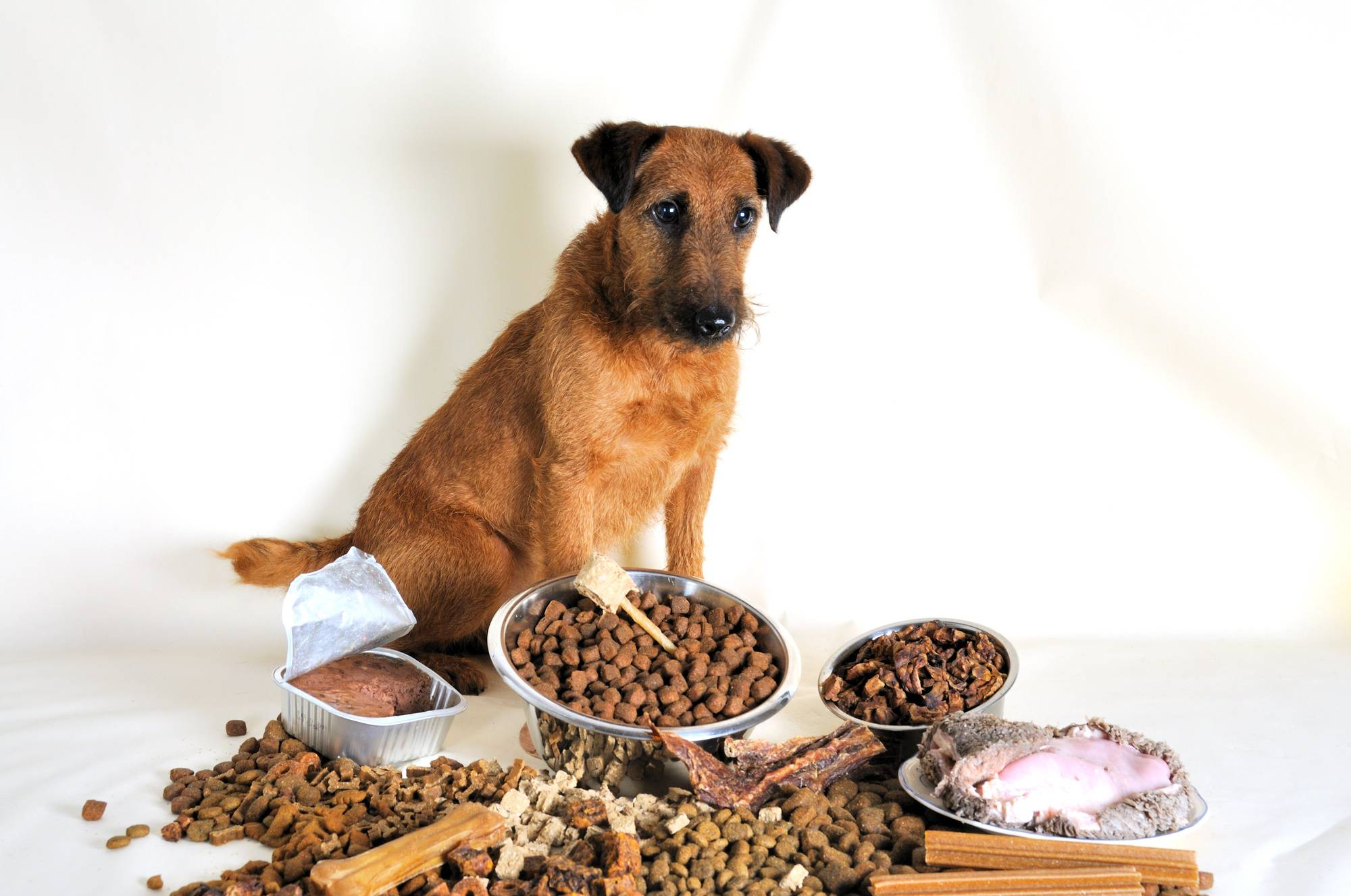 Собака не ест, ест плохо, нет аппетита - причины, болезни, как лечить | наши лучшие друзья