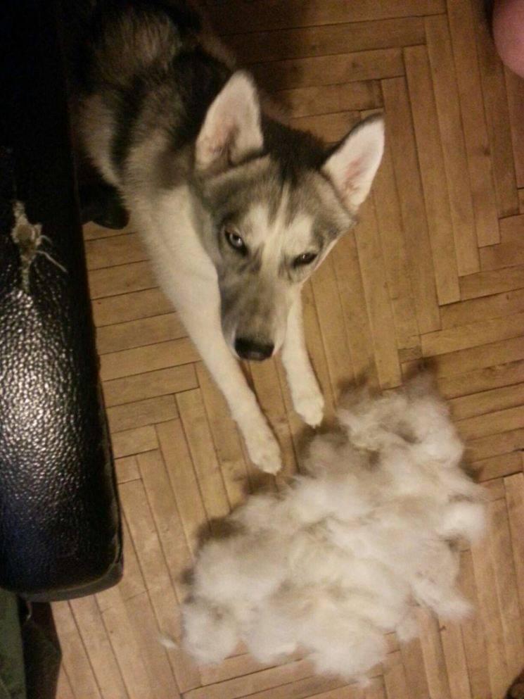 Повышенная линька у собаки