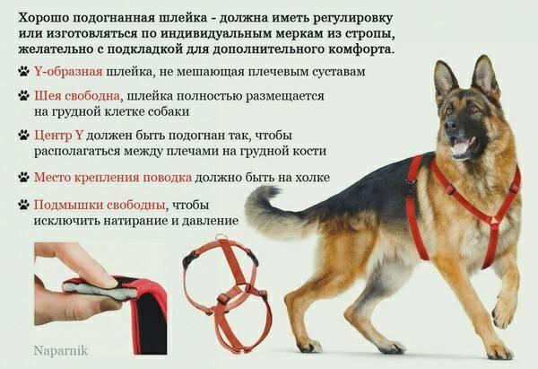 Как выбрать ринговку для выставки собак: рекомендации кинологов