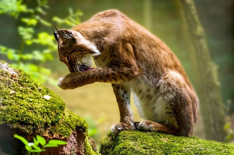 10 интересных фактов о природе нашей удивительной планеты