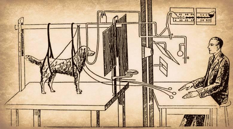 Что такое синдром собаки павлова