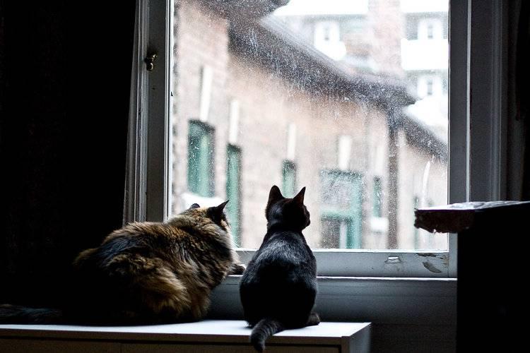 Скучают ли кошки по хозяевам оставаясь одни дома?