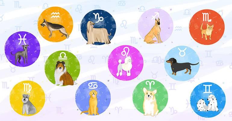 Шуточный гороскоп: на каких животных похожи женщины разных знаков зодиака | сообщество «гороскоп, экстрасенсорика, магия, нумерология, таро, астрология» | для мам
