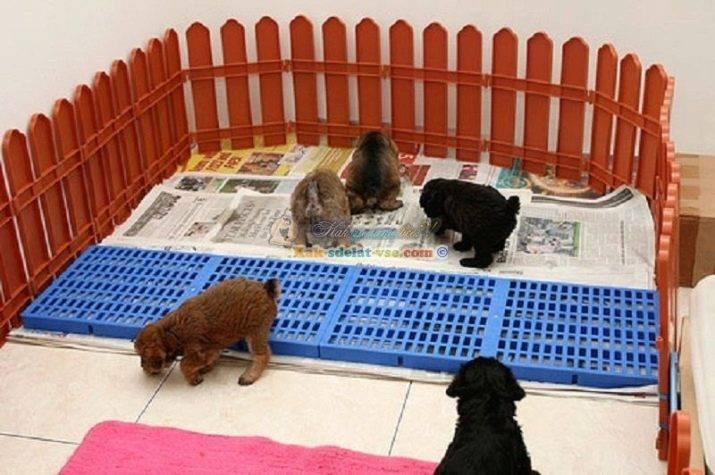 Особенности обустройства туалета для взрослой собаки в квартире или доме
