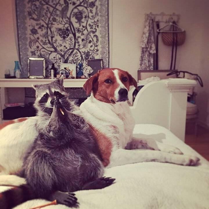 У нас лапки: топ-10 самых знаменитых котов с аккаунтами в русском instagram | новости