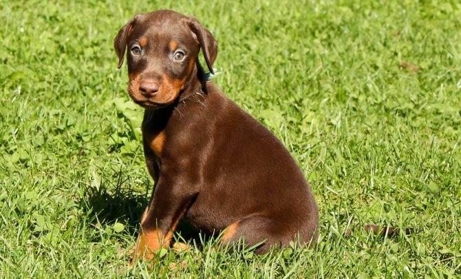Как назвать питбуля: список красивых имен для собак мальчиков и девочек.