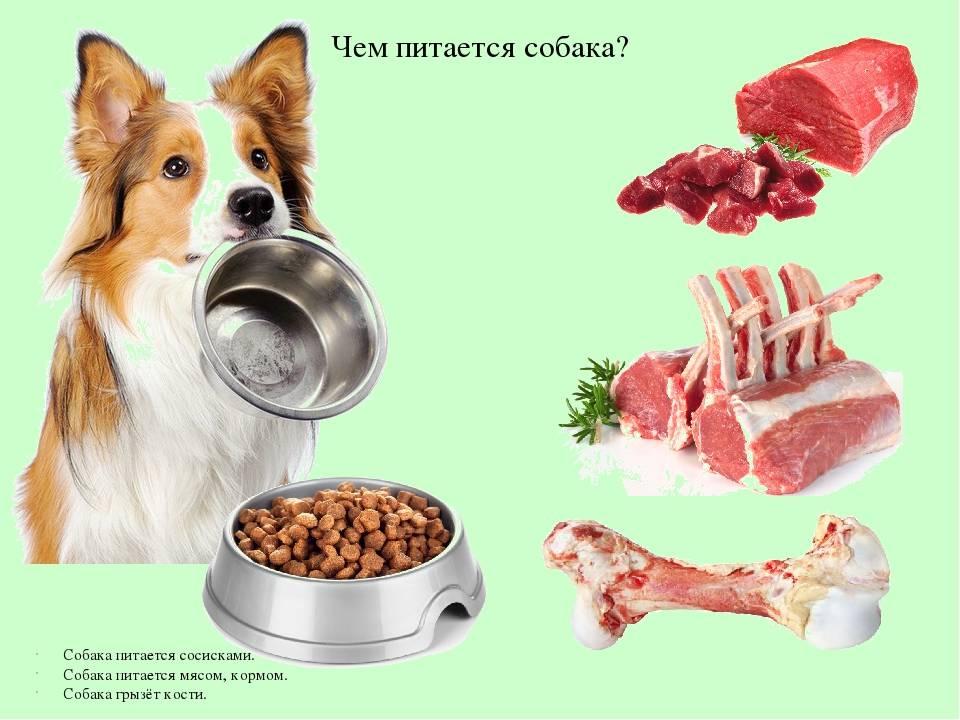 Какие лакомства нельзя давать собакам: список продуктов, возможные проблемы