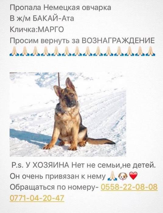 Немецкие клички для собак мальчиков и девочек (кобелей и сук) - petstime.ru