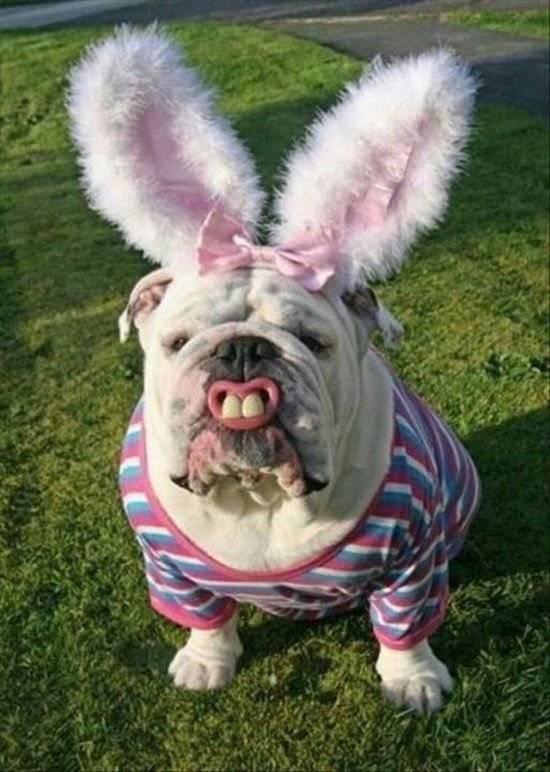 Подробный обзор самых смешных и прикольных пород собак во всем мире