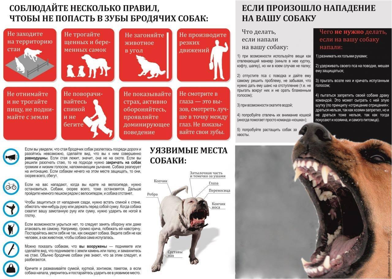 Алгоритм поведения и действий при нападении собаки