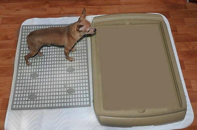 Как приучить щенка ходить на пеленку (многоразовую и одноразовую) в туалет, отзывы
