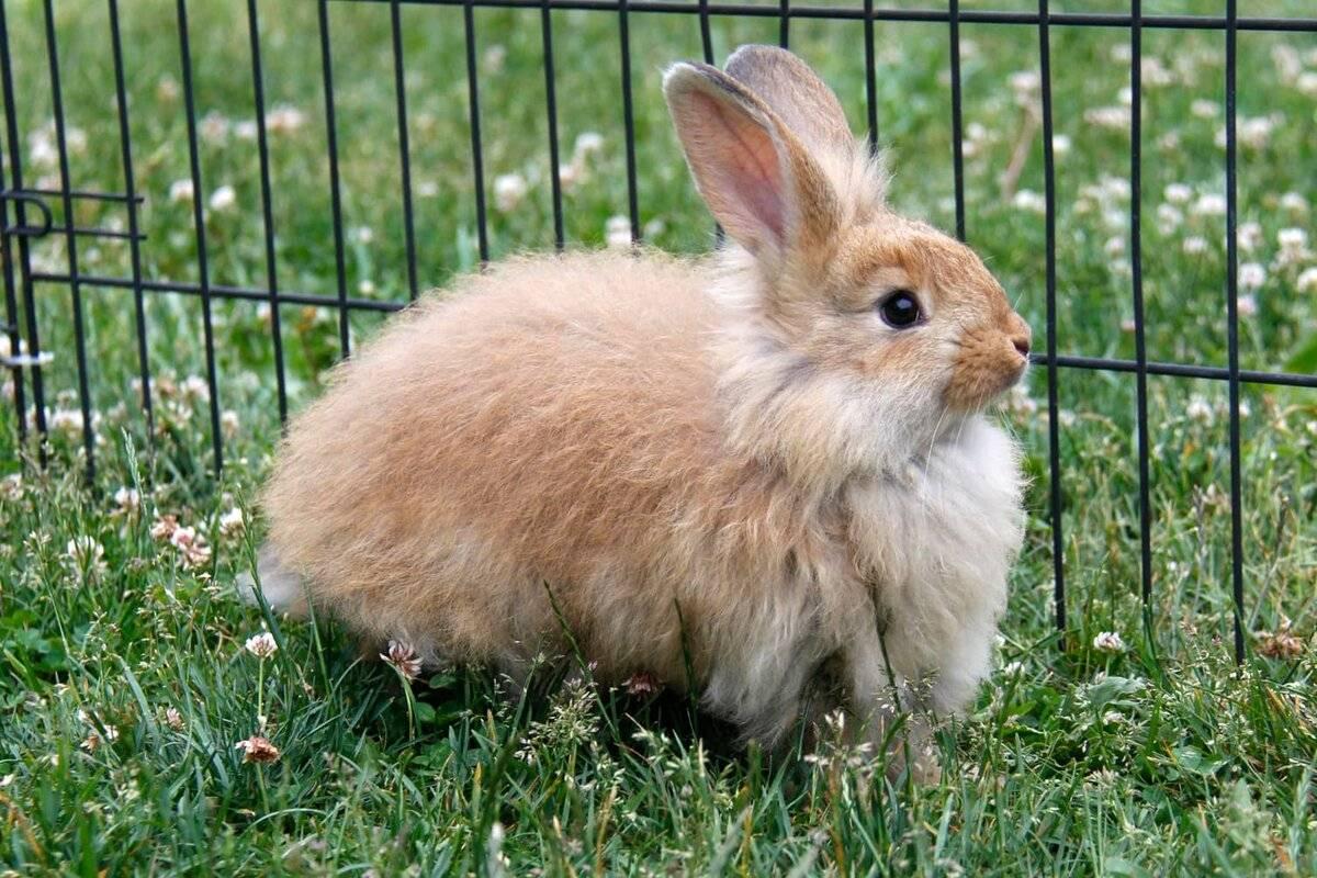 Как определить породу декоративного кролика по внешнему виду. породы декоративных кроликов – фото и названия | дачная жизнь