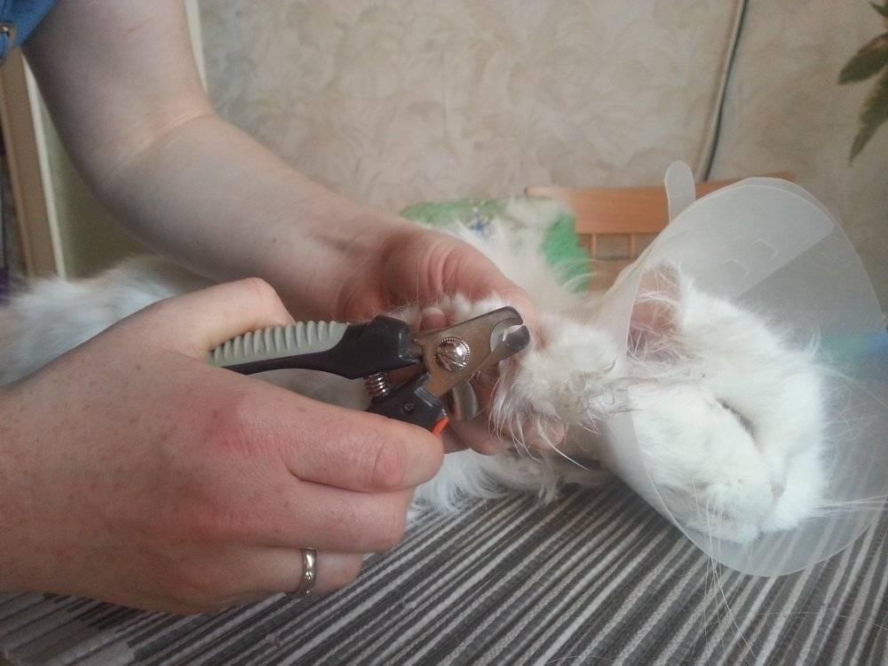 Что произойдет, если обрезать кошачьи усы?
