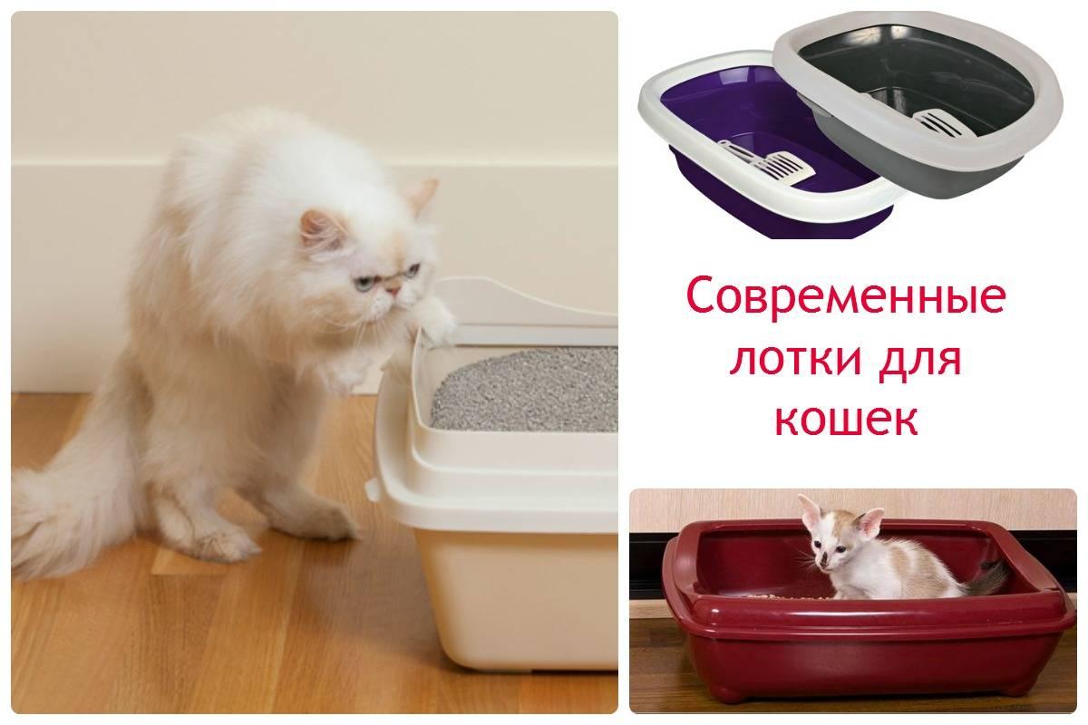 Как приучить котенка к лотку – быстро и просто