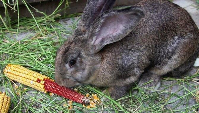 Можно ли кормить кроликов хлебом: польза и вред, как правильно давать