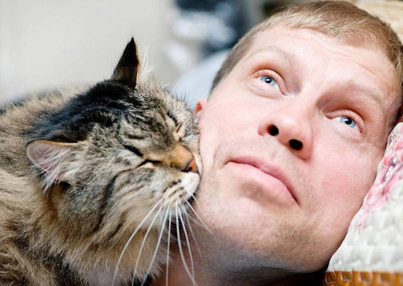 Скучают ли кошки по хозяевам?