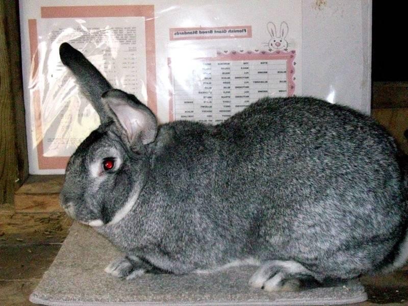 Описание пород кроликов для разведения в домашних условиях