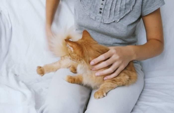 Как расположить к себе и приручить дикого котенка с улицы, можно ли приучить уличную кошку к рукам?